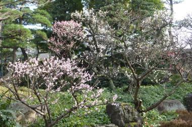 2013syukugawa03