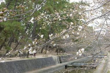 2013syukugawa02
